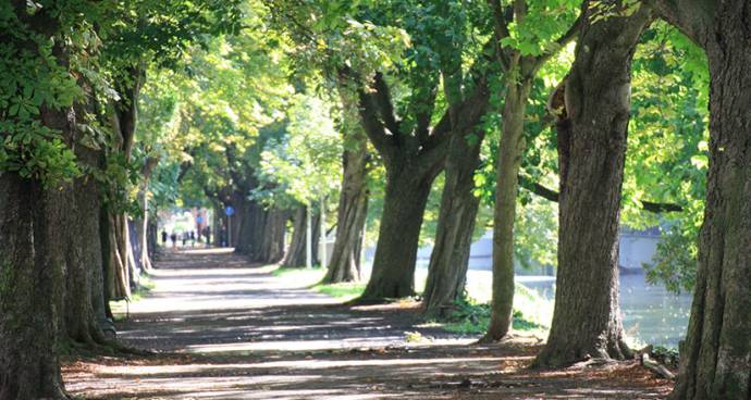 Köln Lindenthal Immobilienmakler Köln Stadtwald