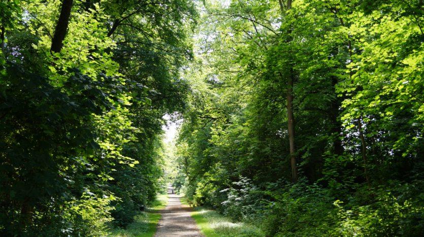 Spazierweg im Kleingartenverein Köln Lindenthal