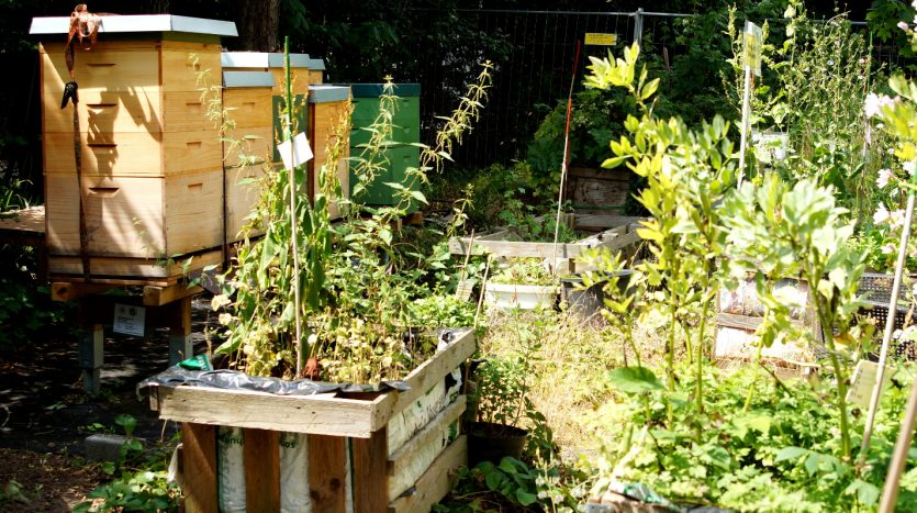 Urban-Gardening-Projekt Campusgarten