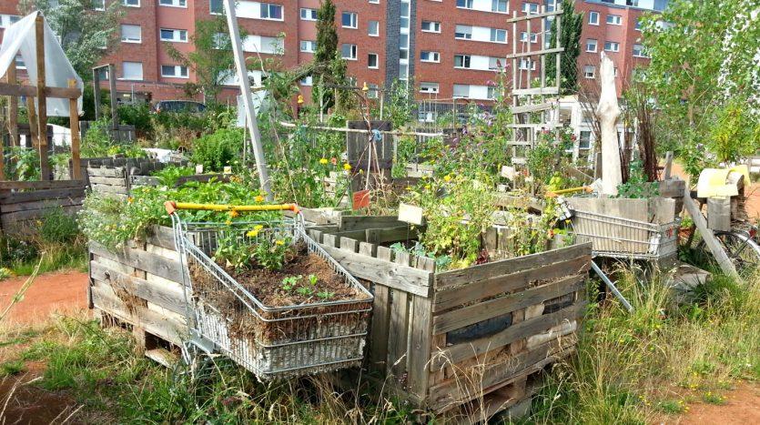 Urban Gardening bei NeuLand in Bayenthal