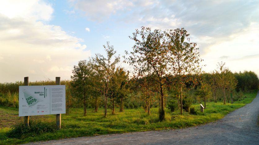 Waldlabor in Köln Marsdorf - Hier beginnt der Wandelwald