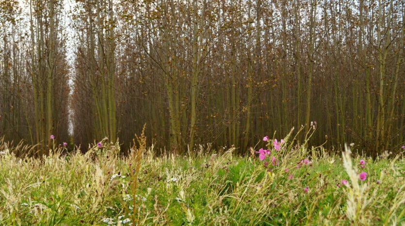 Waldlabor in Köln Marsdorf - Im Hintergrund der Energiewald, vorne Wildblumen