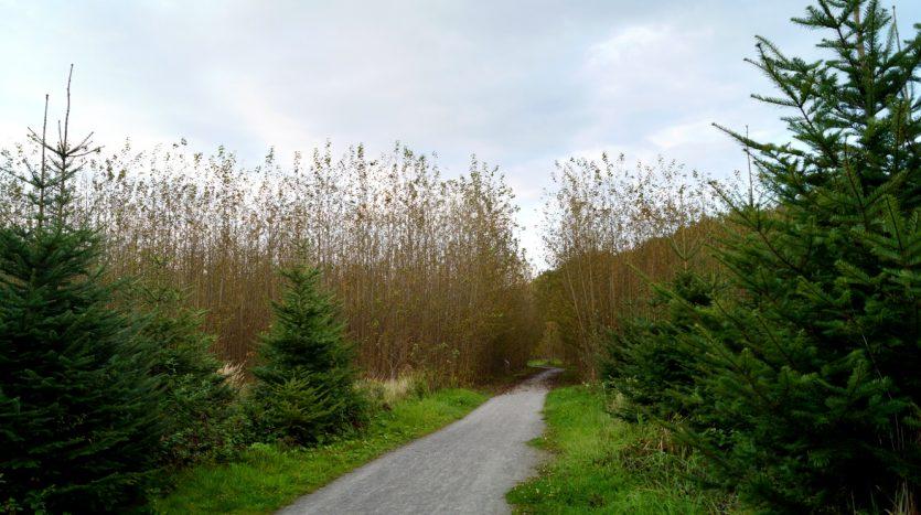 Waldlabor in Köln Marsdorf - Küstentannen sind weniger pflegeintensiv als Fichten