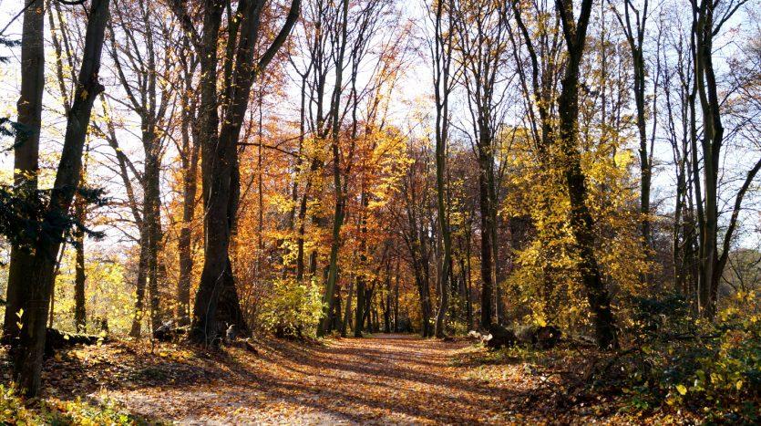 Köln Braunsfeld - In der Friedrich-Schmidt-Straße wohnt man mit Blick auf den Stadtwald