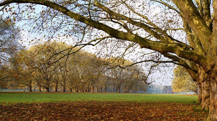 Parks in Sülz - Weg zum Decksteiner Weiher